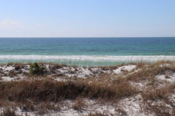 Nature in Panama City Beach