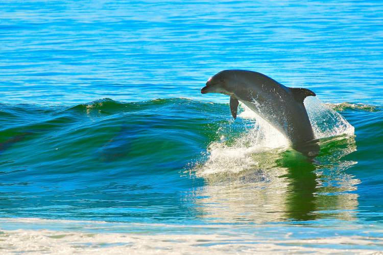 dophin tours in panama city beach florida